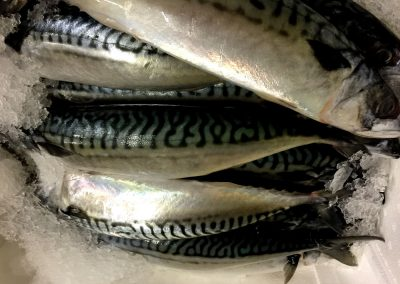 Eddies Seafood Market, Fish Mongers & Fish Shop, Marchmont, Edinburgh Scotland UK